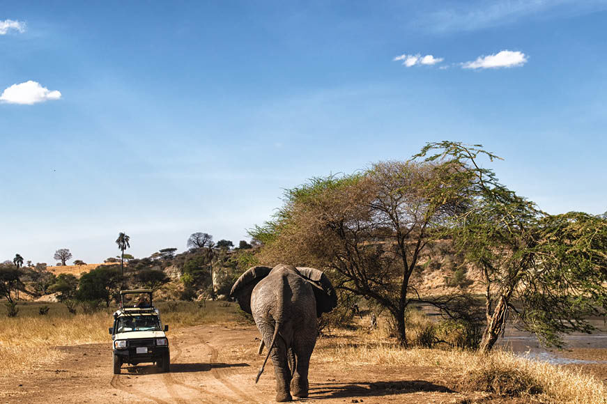 Tanzanie_safari
